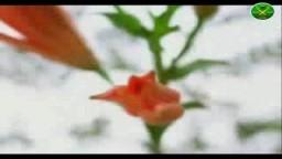 قصائد في مدح الرسول - الشاعر ناصر صلاح