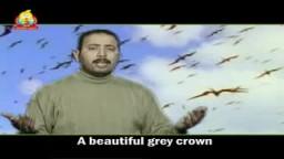 المنشد المصري اشرف زهران : كليب طير الليل الحزين