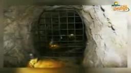 حفريات صهيونية في المسجد الأقصى