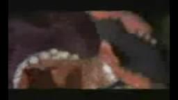 اخطبوط يفترس  سمكة قرش