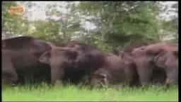 قطيع من الافيال يثير الذعر في الهند