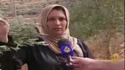 مستوطنون صهاينة  يعتدون على أشجار الزيتون