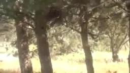 شاهد مذبحة الأمن السوري في صيدا