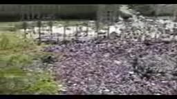 مليونية الانتفاضة الفلسطينية في مصر