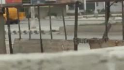 اطلاق الرصاص الحي على بعد امتار من المتظاهرين فى سوريا