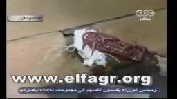 غلق صناديق التصويت بالاسكندرية