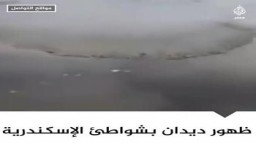 ظهور ديدان بشواطئ الاسكندرية