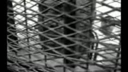 خيرت الشاطر لا يغيب ابدا .. أكثر من 10 سنوات فى سجون النظام الظالم